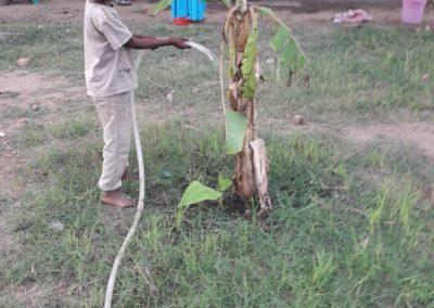 Waisenhauskinder lieben es, Pflanzen zu pflegen